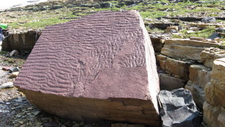 Ripple marks in red rock of Grinnell Formation