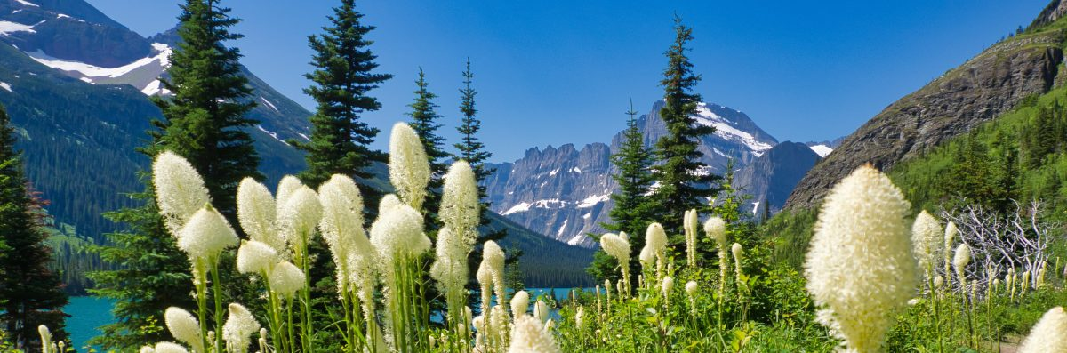 Beargrass Along Lake Josephine, Glacier National Park, Many Glacier region