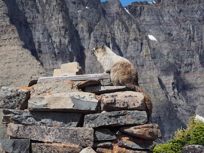 Piegan Pass - Marmot Sitting on Bell Base Built in 1926 by Great Northern Railroad