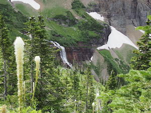 Morning Eagle Falls with Bear Grass, Glacier National Park