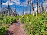 Life Begins Again After Reynolds Creek Fire, Glacier National Park