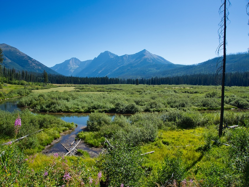 Rogers Meadow, Glacier National Park