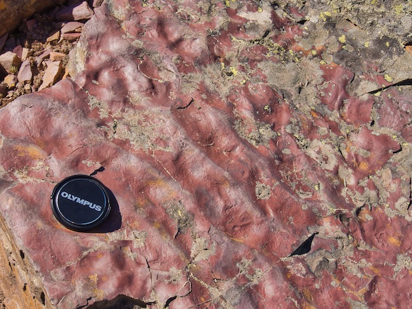 Red Argillite Rock with Ripple Marks, Glacier National Park