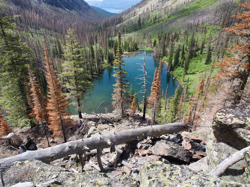 Glacier National Park: Snyder Lake and victims of the 2017 Sprague Fire
