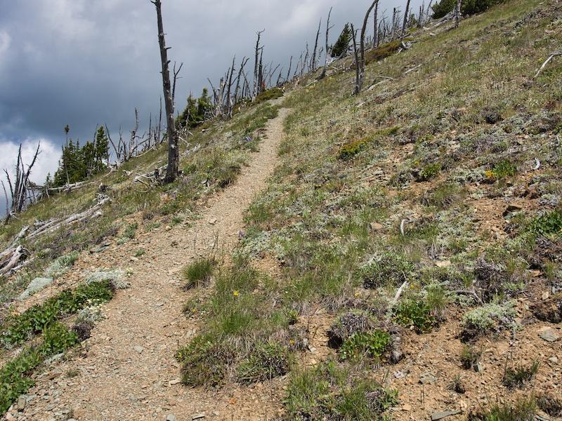 Glacier National Park, Elk Mountain, whitebark pine snags